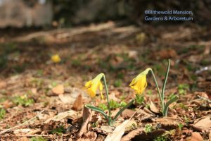 the very first daffs