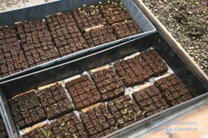 The Good Earth seedling blocks - sifted coir plus compost