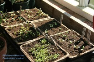 seedlings emerging