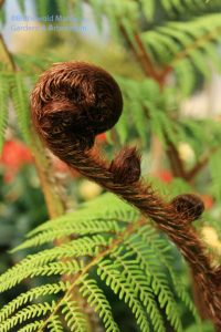 a tree fern fist at Haskell's