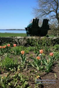 Tulips and reverie in the North Garden