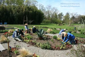 Rockettes planting The Potager - April