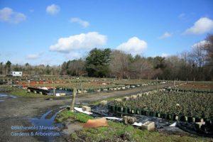 A Roseland Nursery acre