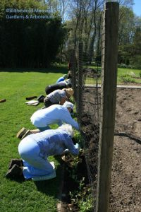 Deadheads planting the sweet peas