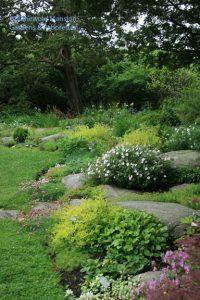 Rock Garden 6-10-09