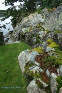 more moss rocks and sedum flowers