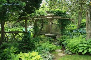 a pergola in the Japanese garden