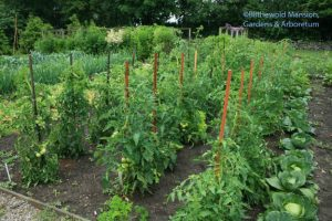 3 rows to watch in the vegetable bed - and cabbage consolation.