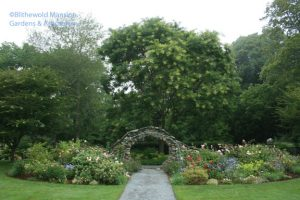 The Rose Garden back in bloom