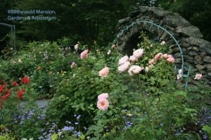 The Rose Garden back in full bloom