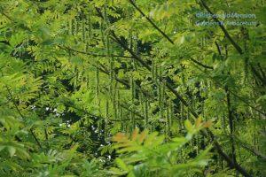 wingnut fringe