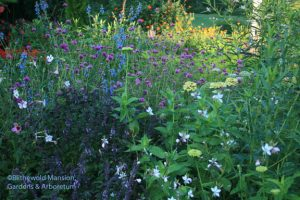 Benary Giant Lime zinnias, Gomphrena 'Fireworks' and African blue basil