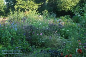 a frothy view within the purple bed