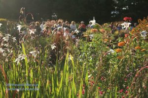 Visitors enjoying the evening light and performance at Wednesday's Garden Soiree