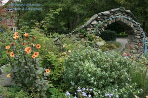 Dahlia 'Rio Perdido', Daphne transatlantica, ageratum and roses