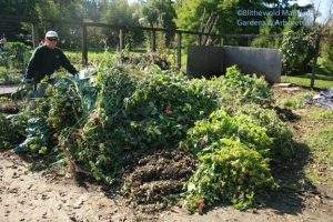 Cathy in the compost - 2 weeks ago!