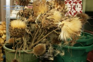 still life with cardoons and teasel
