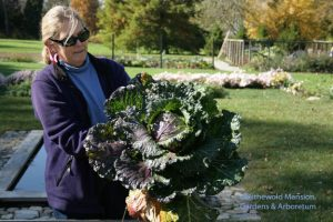 Deadon Hybrid cabbage - what a beaut!