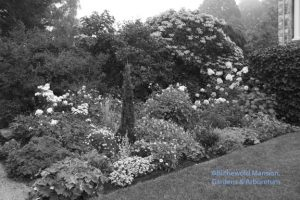 a North Garden bed desaturated (mid-August)