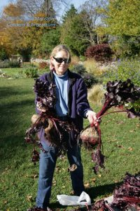 Cathy and the beets! - November