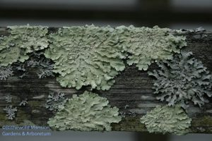 still life with lichen