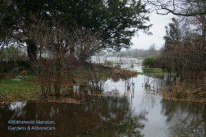 Rock Garden flood north view, 12-3-09