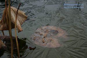 cement pond ice bloom