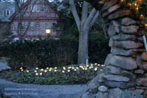 """Epimedium """"blooming"""" through the Moongate (a Fred Perry Original light display)"""