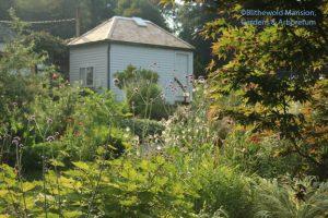 view through the Verbena bonariensis