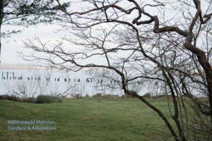Highbush blueberry and the Bristol harbor