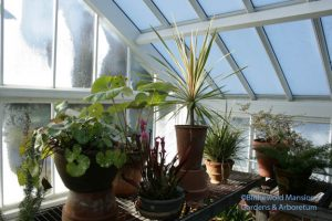 Farfugium, cordyline, etc and icy windows