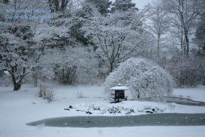 snowy pond 12-31-09