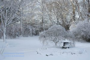 blanketed pond