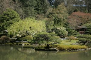 The Japanese Garden  (at the arboretum)