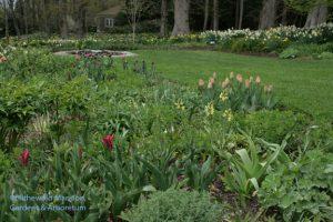 North Garden tulips - Pimpernel (red), Amazone (apricot), Jackpot (purple)