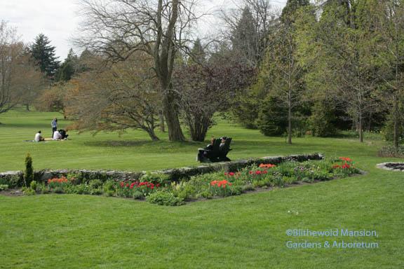 Tulip mania - Blithewold