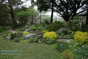 Rock Garden after planting, 4-28-10