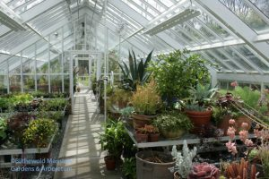 the sun streaming into the greenhouse - a welcome change from rain.