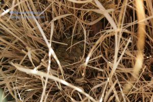 a nested toad