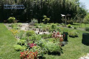 the painters' palette of plants for the big Display  Garden bed