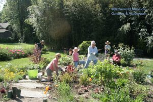 Tuesday volunteers - the Deadheads - planting