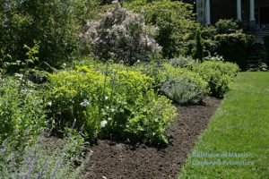 open spaces for summer/fall bloomers in the North Garden