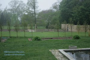 View of the vegetable garden through the new Metasequoia hedge