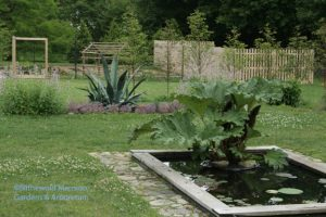 Gunnera and Agave - center stage