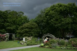 Rose Garden - peak and squall