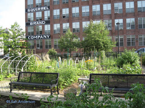 Another view of Squirrel Brand Community Garden