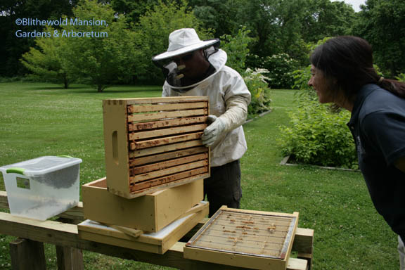 Jeff delivering the first hive - with Gail paying close attention.