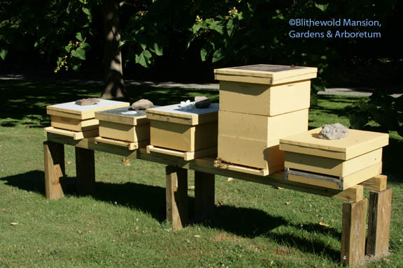 Aquidneck Honey hives