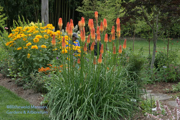 Kniphofia 'Alcazar', Rudbeckia 'Indian Summer' and a touch of blue