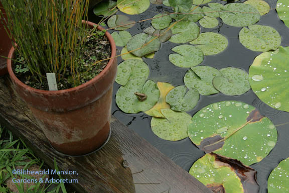 little frog on a lily pad